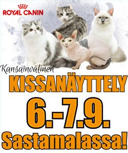 kissa1